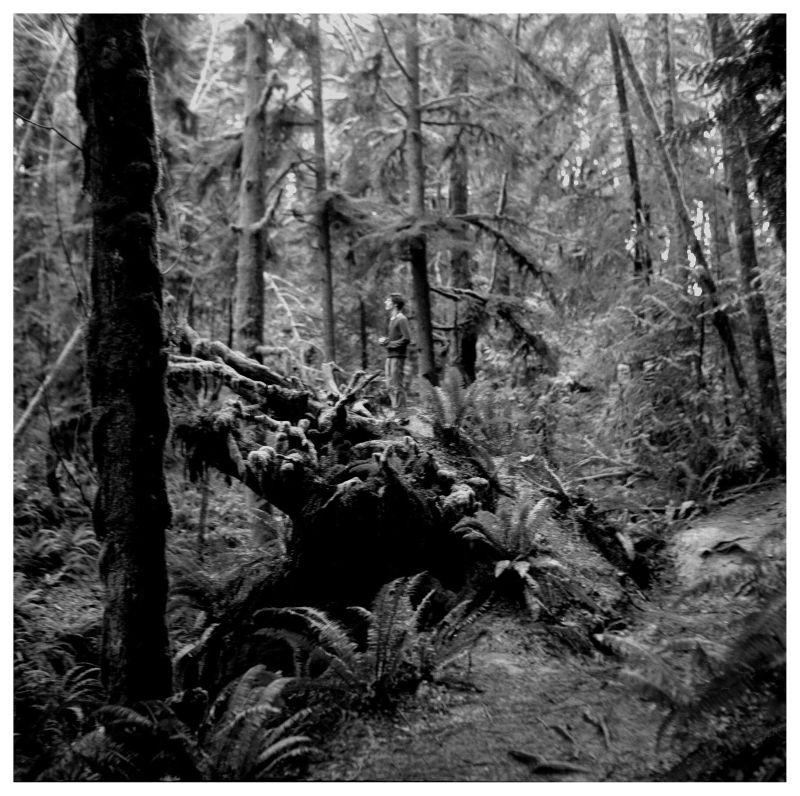 forest at evergreen state college - photo