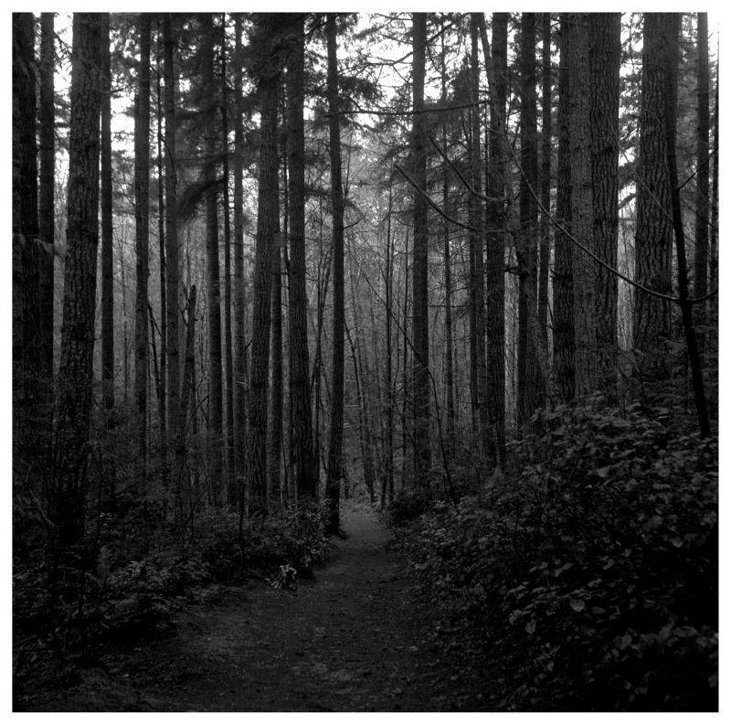 evergreen state college forest path - photo