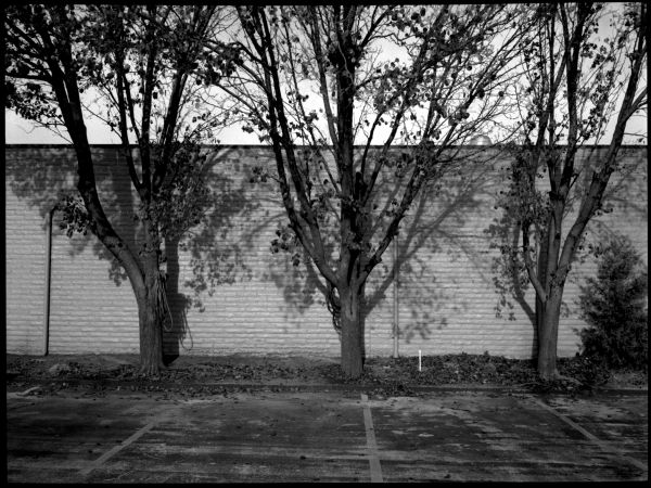 trees & wall - grant edwards photography