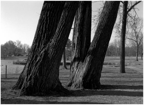 South Lake Park Trees