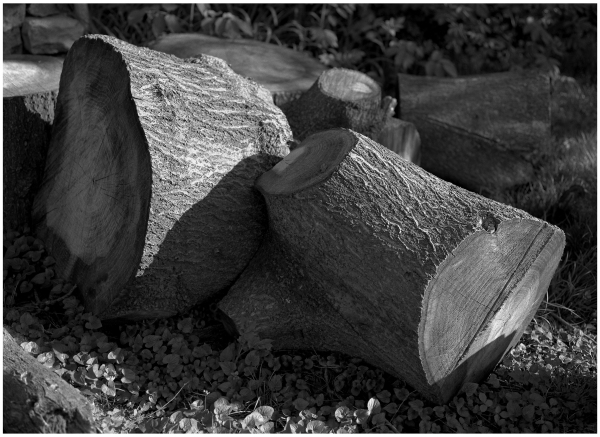 tree trunk - grant edwards photography