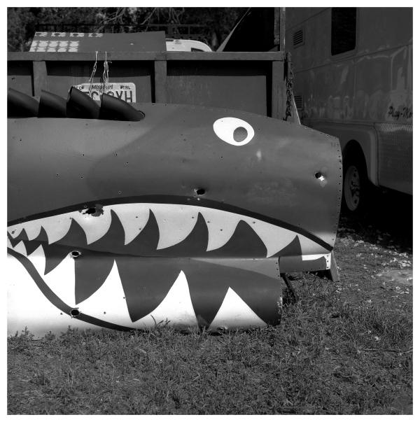 military shark - grant edwards photography