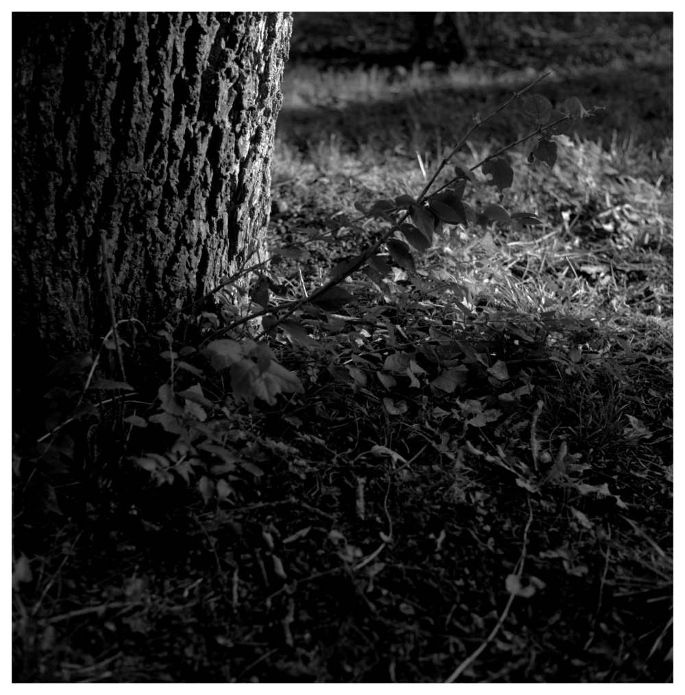 tree, weeds - grant edwards photography