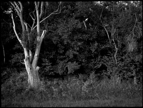 rural roadside - grant edwards photography