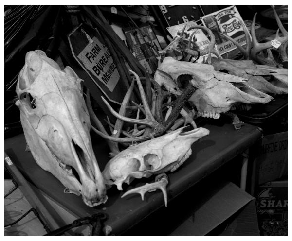 sparks flea market - grant edwards photogaphy