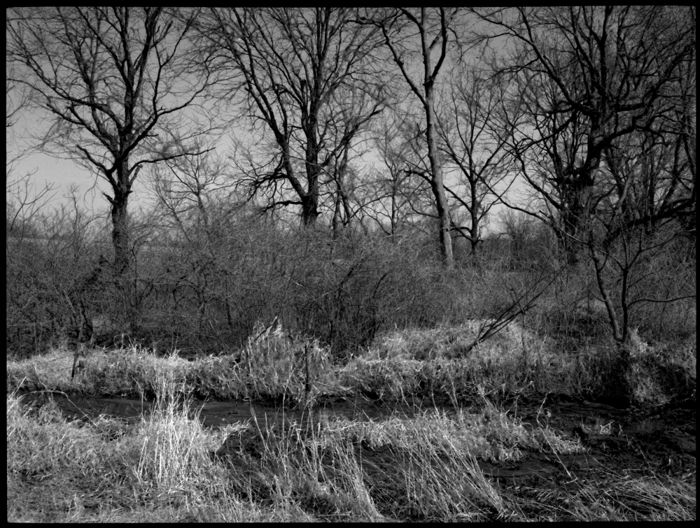 winter trees - grant edwards photograpy