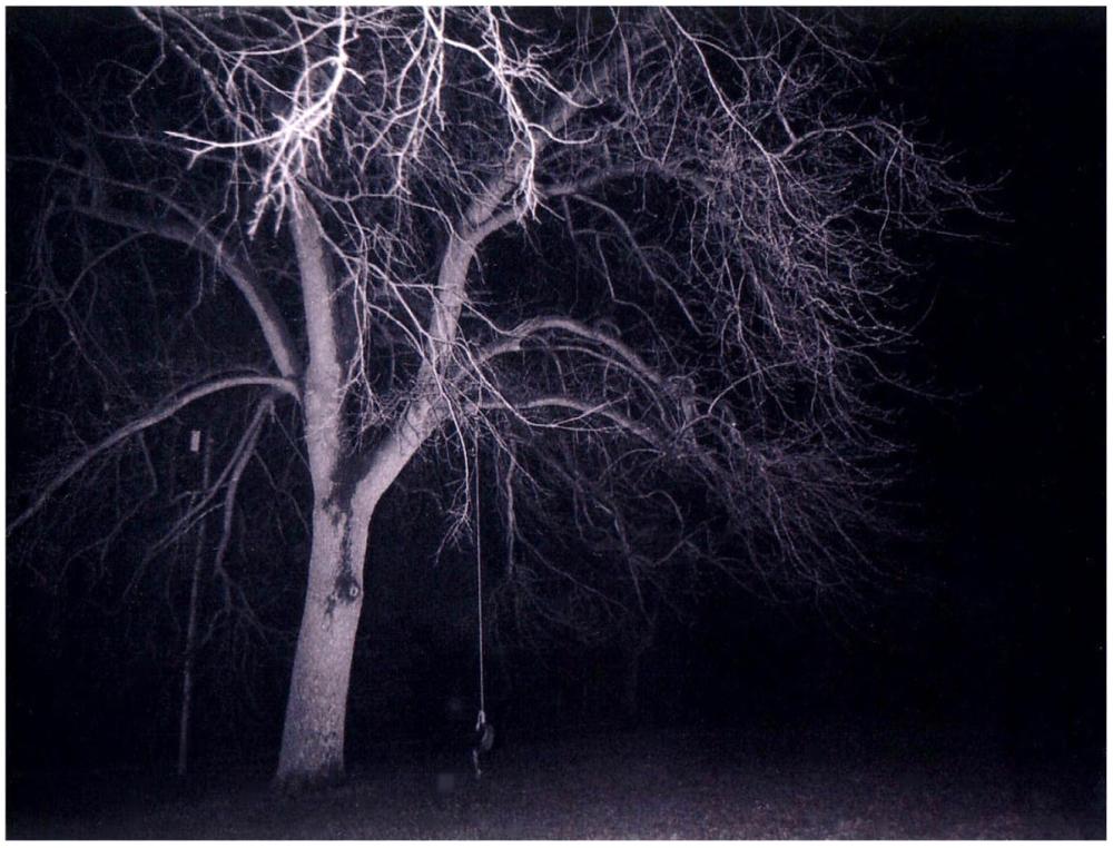 polaroid tree - grant edwards photography