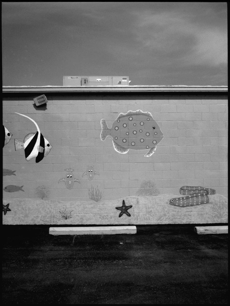 fish wall - grant edwards photography