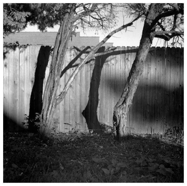 Trees & fence - grant edwards photography