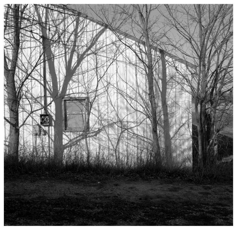 House & trees - grant edwards photography