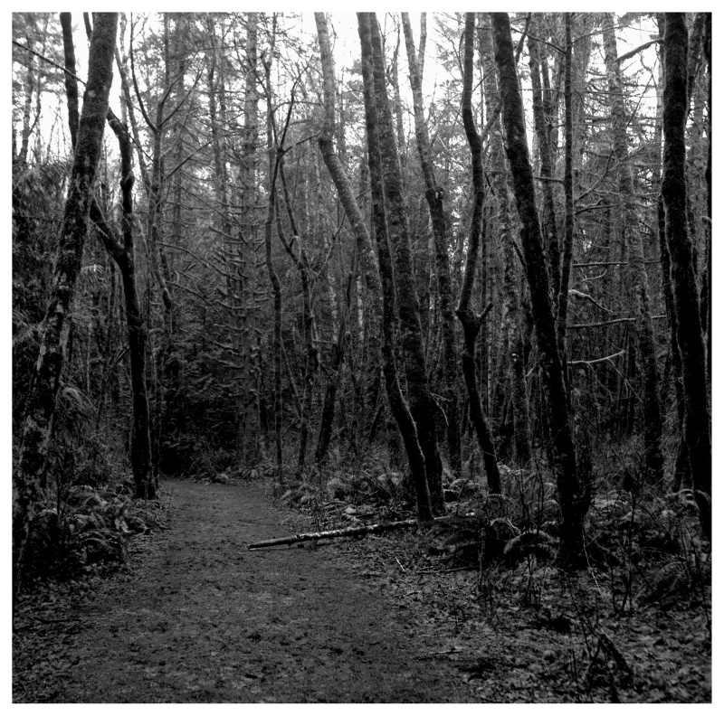 forest path - grant edwards photography