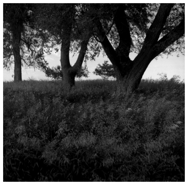 tall grass - grant edwards photography