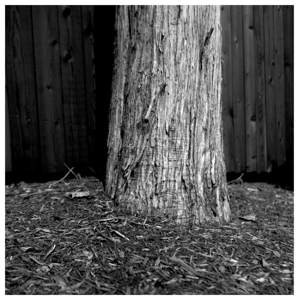 tree trunk - grant edwards photography
