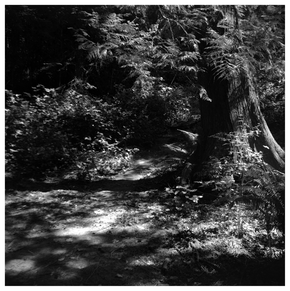 olympia, wa - grant edwards photography