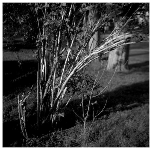 old overland park, ks - grant edwards photography