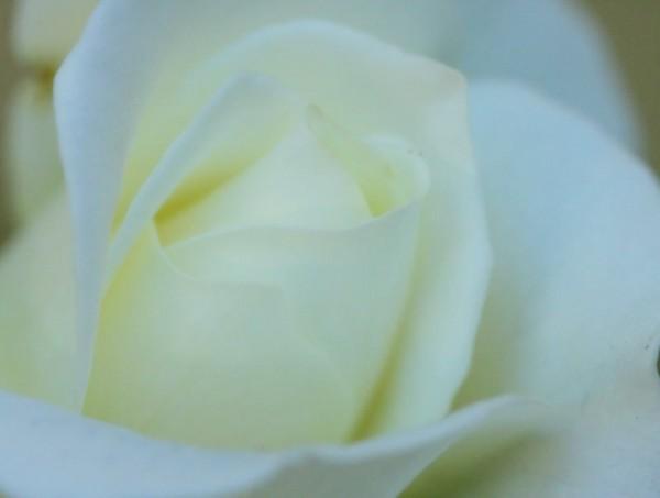 delicate softness