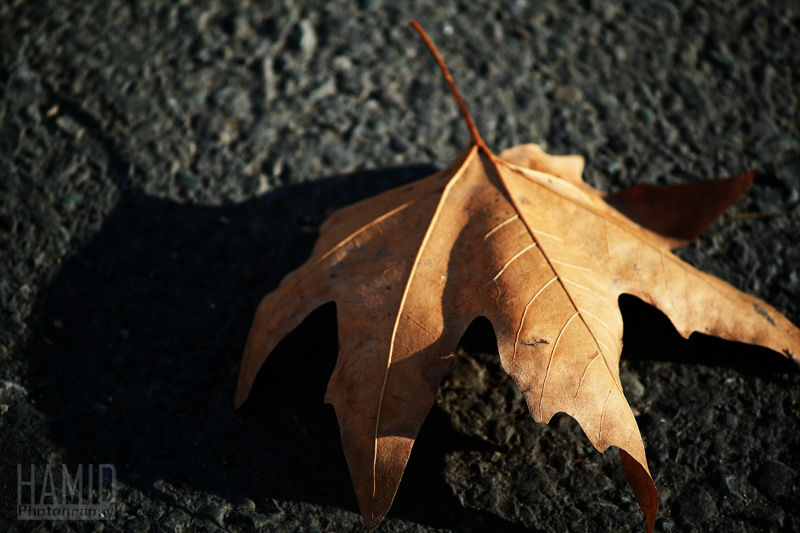 Desiccated leave