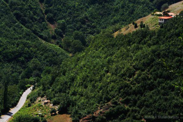 Shahsavar,2000