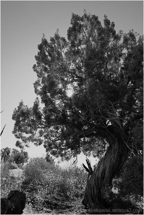 at joshua tree.