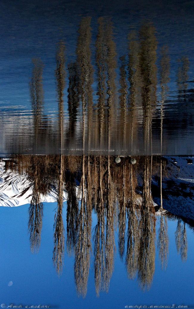 Blue Reflect...