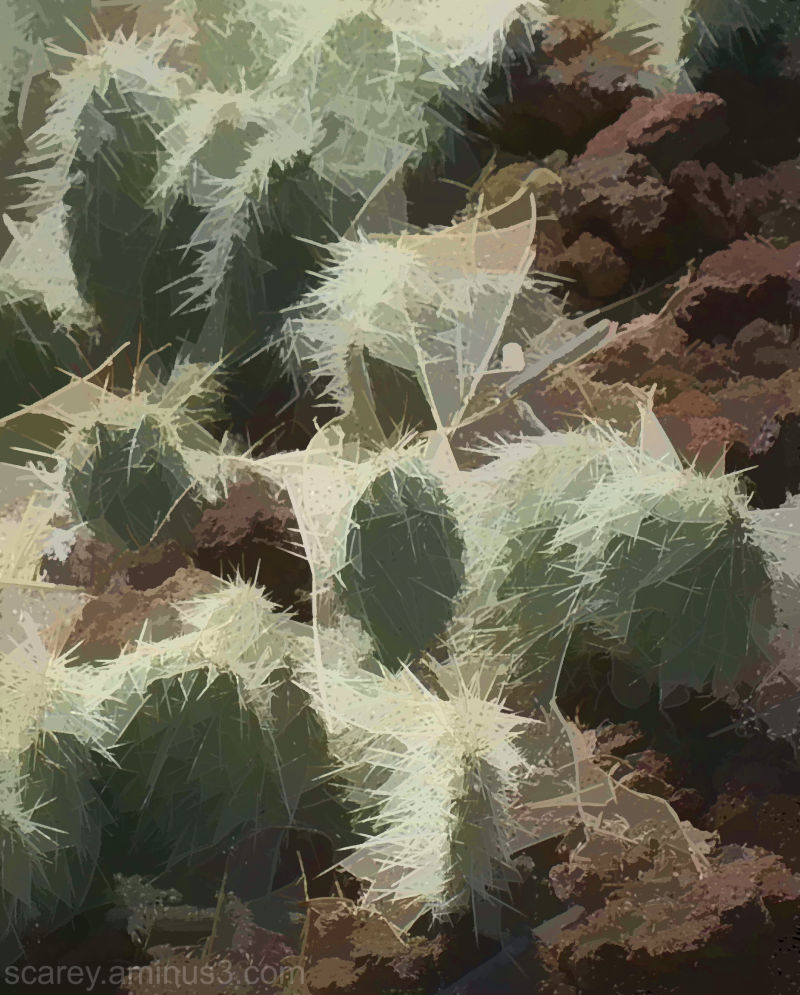 Cactus abstract