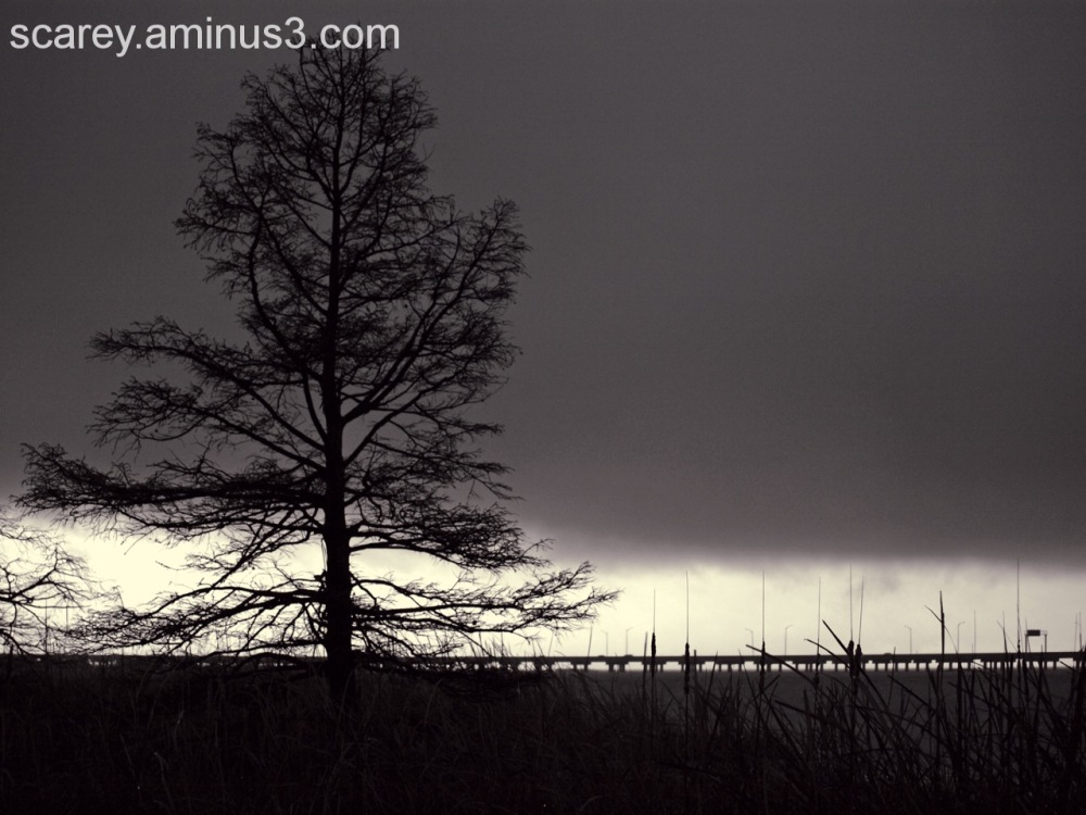 Tree and Storm Clouds