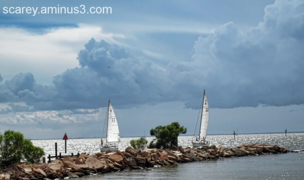 SAil boats make for safe harbor during a storm