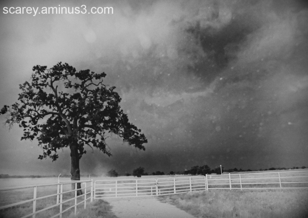 background storm highlights isolated tree