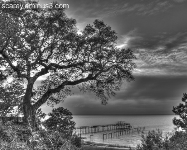 Live oak tree overlooking Mobile Bay, Alabama