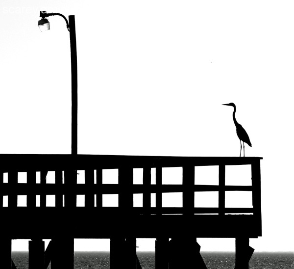 Silhouette of a great blue heron on a pier