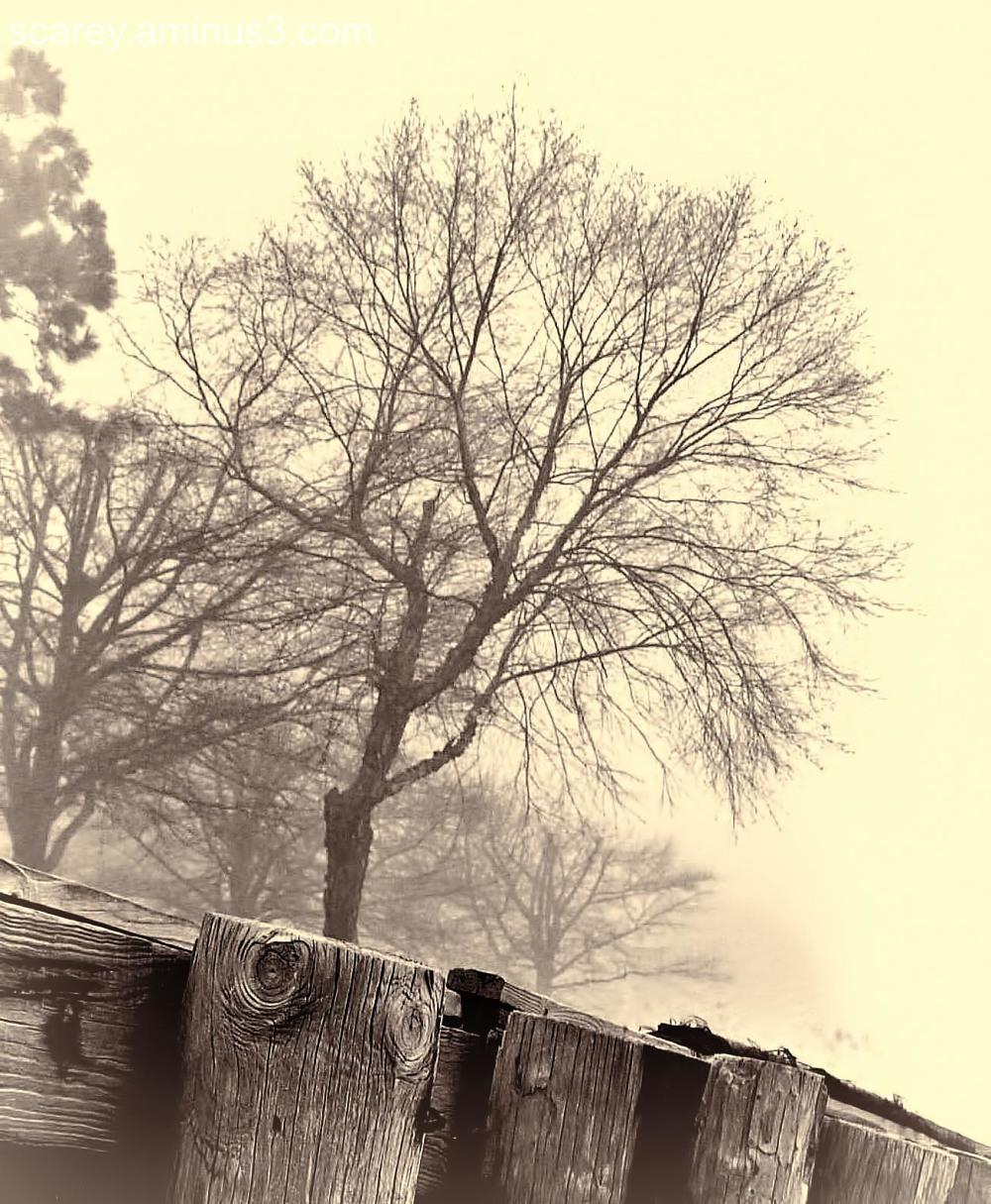 Foggy morning along Mobile Bay, Alabama