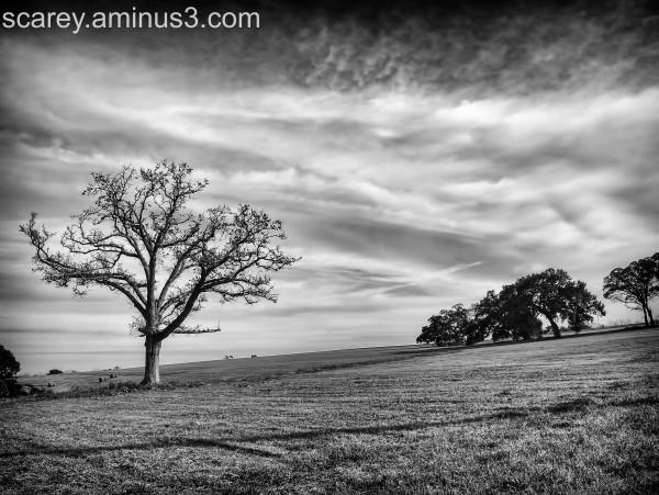 Rural scene in Baldwin County Alabama