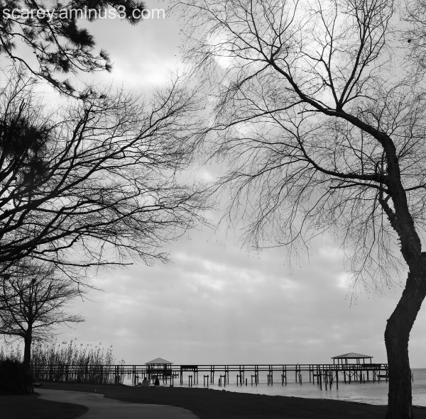 B&W image along Mobile Bay, Alabama