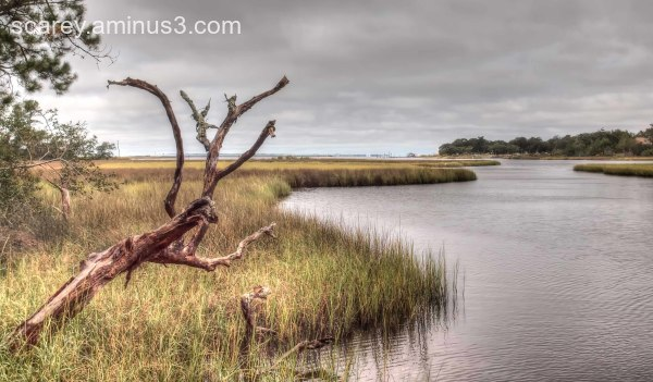 Salt marsh, Gulf islands National Seashore