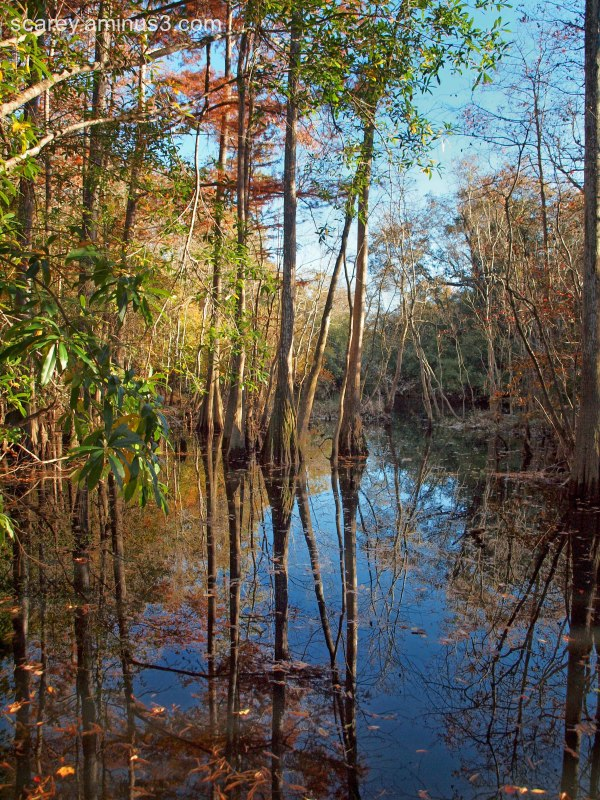 A swamp in Mobile County, Alabama on a fall day.