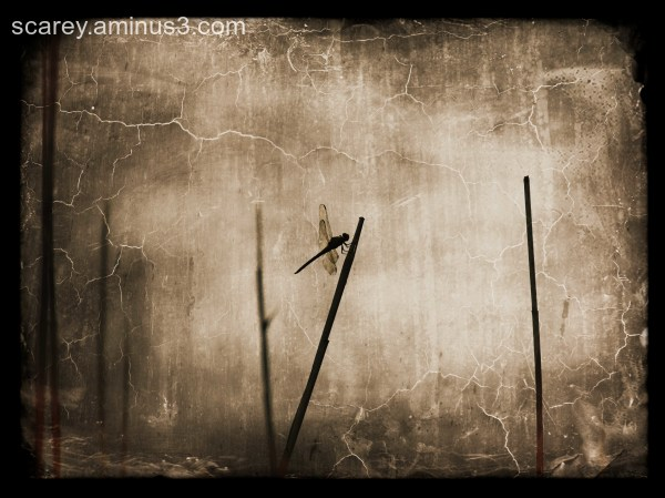 A dragonfly rests on a reed along Mobile Bay.