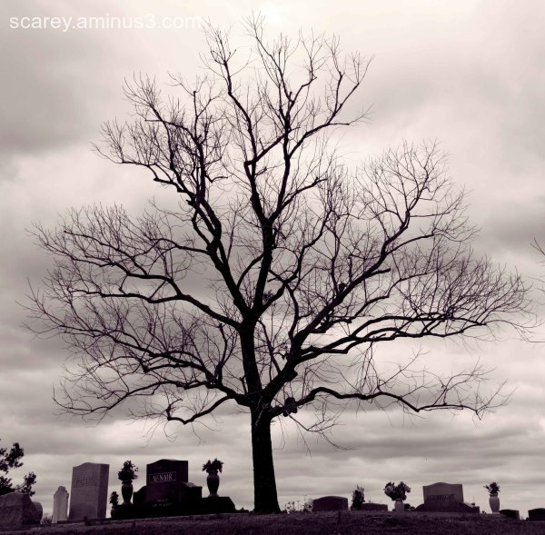 A tree grows in a cemetery in Alabama