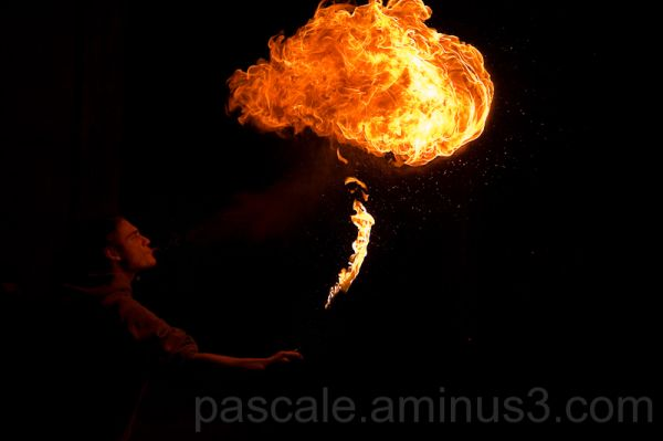 Champignon de feu