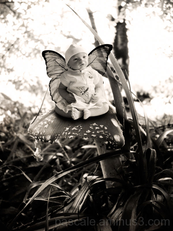 Ef(fée) papillon