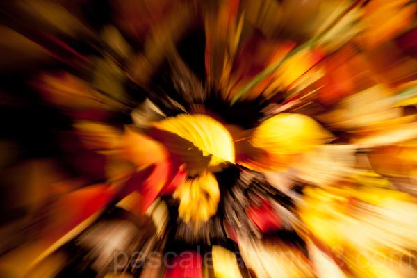 Explosion d'automne