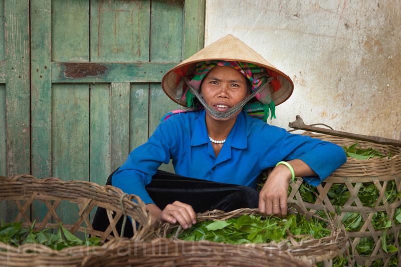Regards : Vietnam du Nord