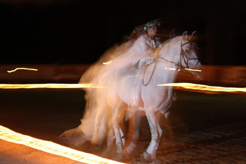 Girl in white riding a white horse
