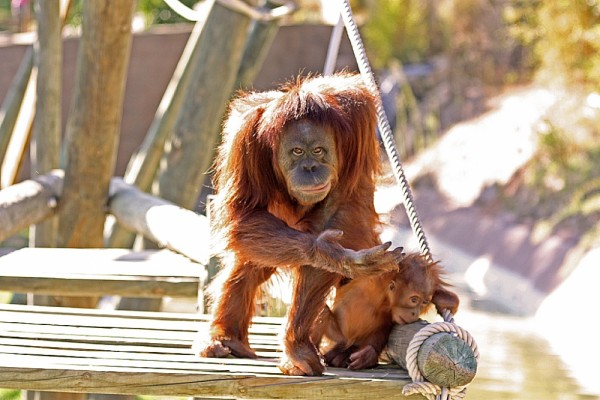 A day at the Zoo (Lisboa) - IV
