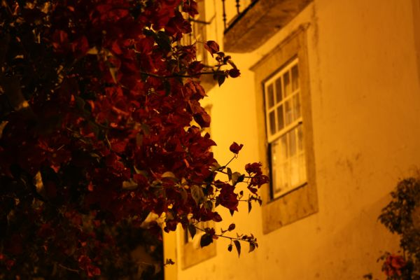 Autumnal colors... by night