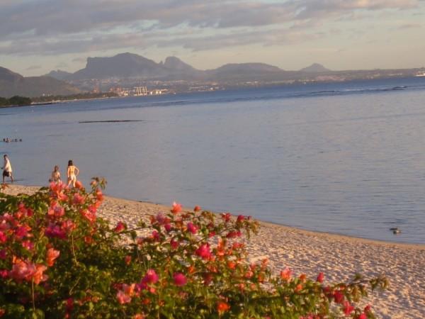 Mauritius flowers on the beach