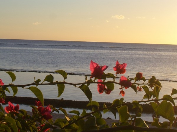 Mauritius flowers on the beach 2