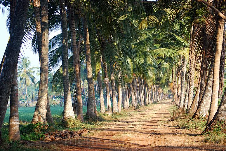 Thavanoor agricultural college, farmland