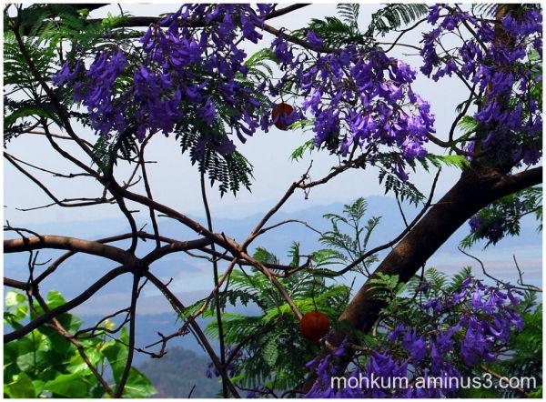 The Purple flowery