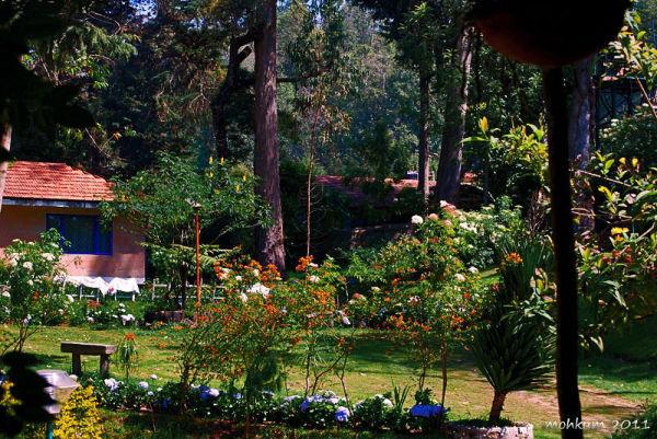 garden flower trees