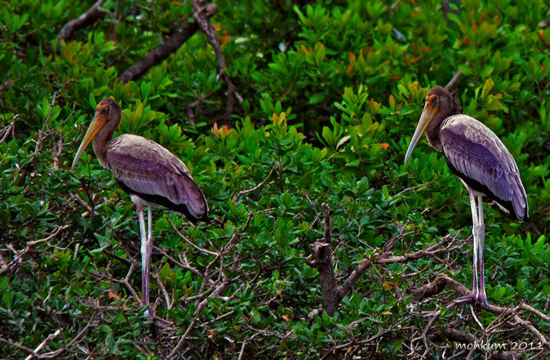 Vedanthangal Water Birds Sanctuary
